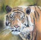 Tigerportrait (2005)