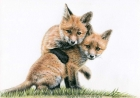 Fox Puppies