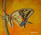 Schmetterling 1 (2006)